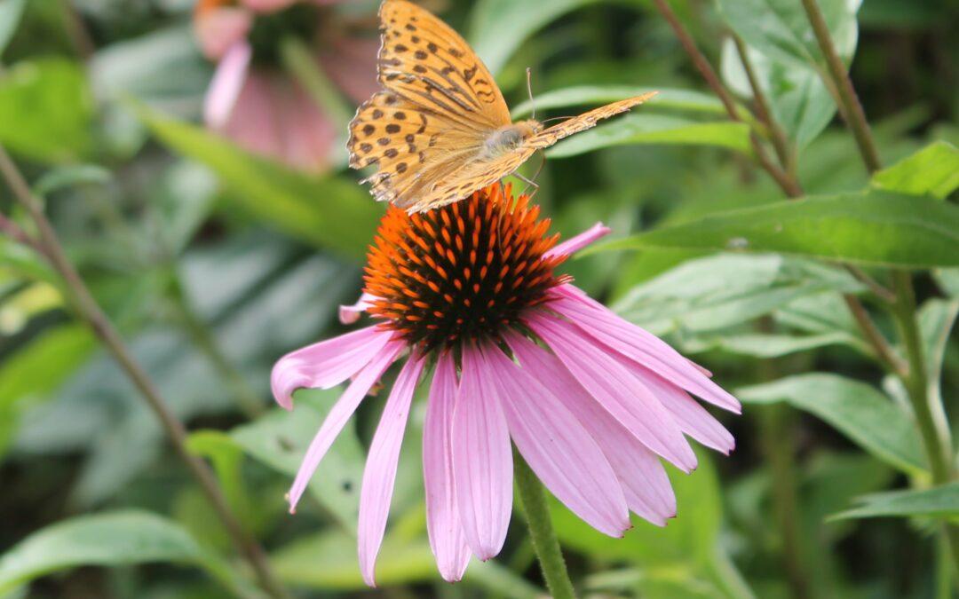 Rimedi naturali: alla scoperta della fitoterapia
